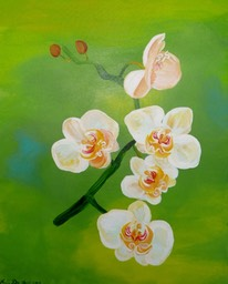 White Orchids 50x60